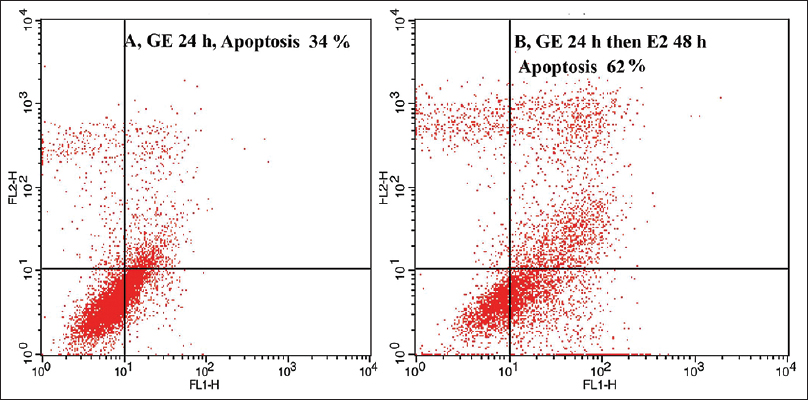 Figure 3: Effect of genistein on HepG2 cells apoptosis. Maximal apoptotic cell was observed in the group which received genistein for 24 h and then estradiol for 48 h and minimal apoptotic cell was observed in the group which received E2 alone for 24 h