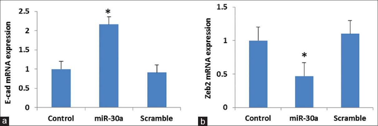 Figure 2: Real-time polymerase chain reaction of E-cadherin (a) and ZEB2 (b) in B16F10 melanoma cell lines after transfected with miR-30a and scramble in comparison with control. *<i>P</i> < 0.05 compared with the control and scramble groups